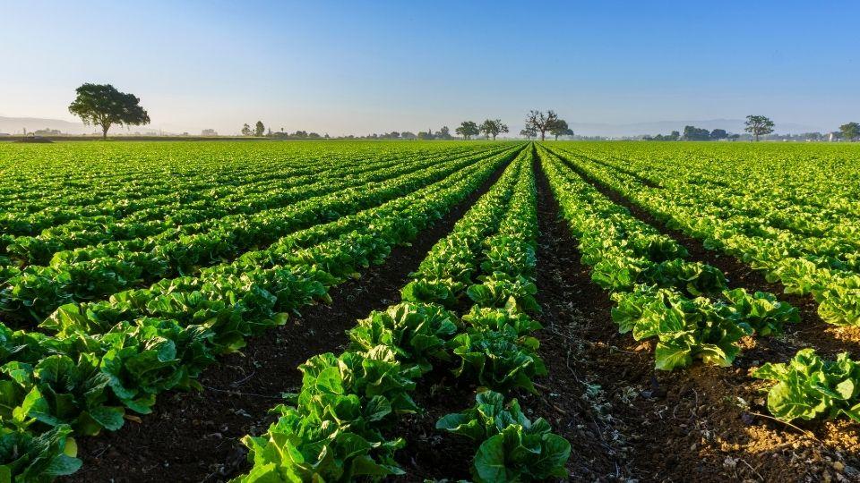 agroalimentare sostenibile